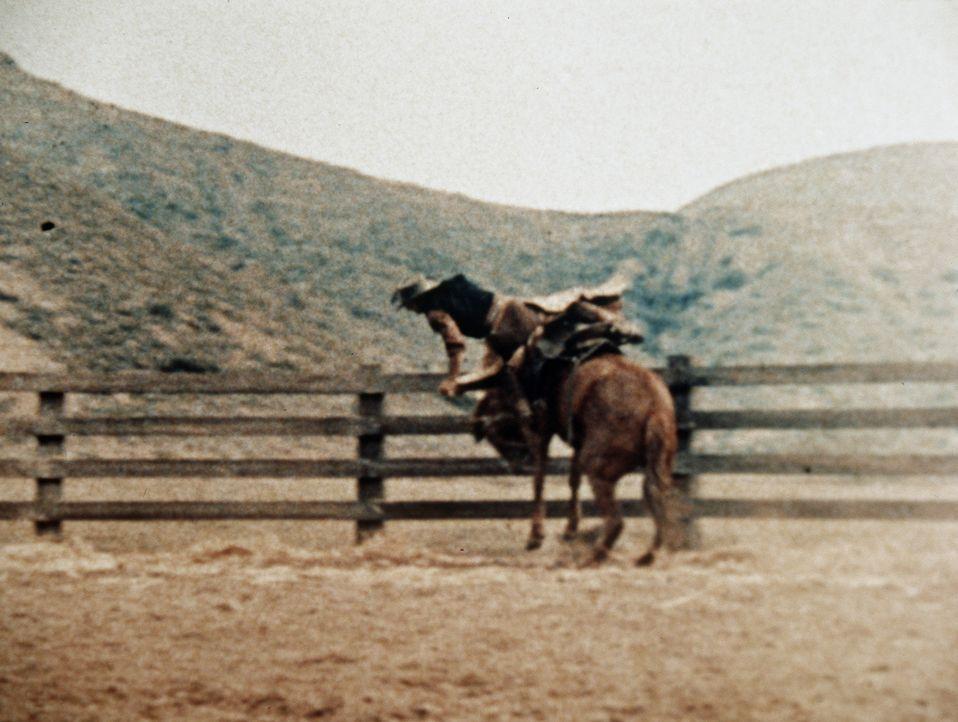 Vergeblich versucht Adam Cartwright (Pernell Roberts), ein Wildpferd einzureiten. - Bildquelle: Paramount Pictures