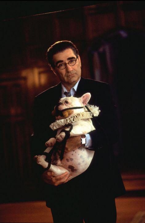 """Peters liebenswerter Kollege und Freund, Howie Rottman (Eugene Levy), nimmt sich nicht nur des fetten Hundes """"William Shakespeare"""" an, sondern auch... - Bildquelle: Touchstone Pictures"""