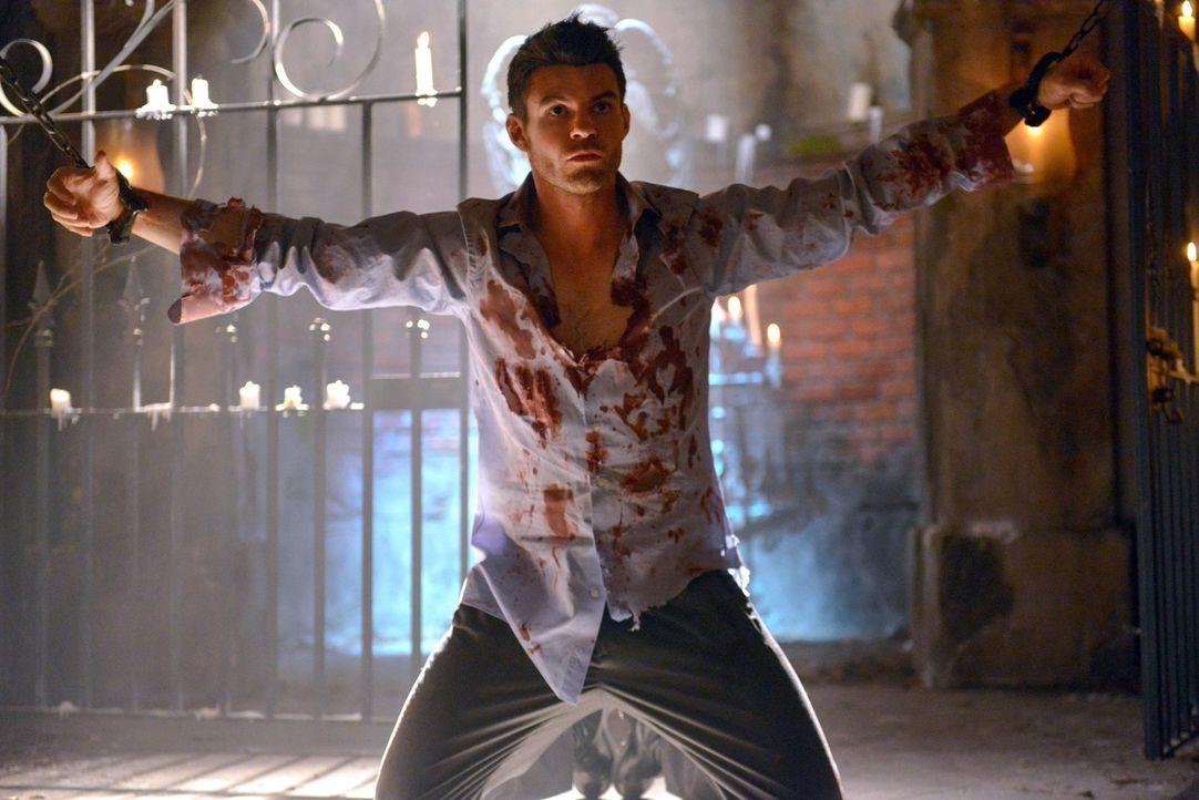 Nachdem seine Mutter dafür gesorgt hat, dass er sich an die Wahrheit erinnert, muss Elijah (Daniel Gillies) jetzt eine Entscheidung treffen ... - Bildquelle: Warner Bros. Television
