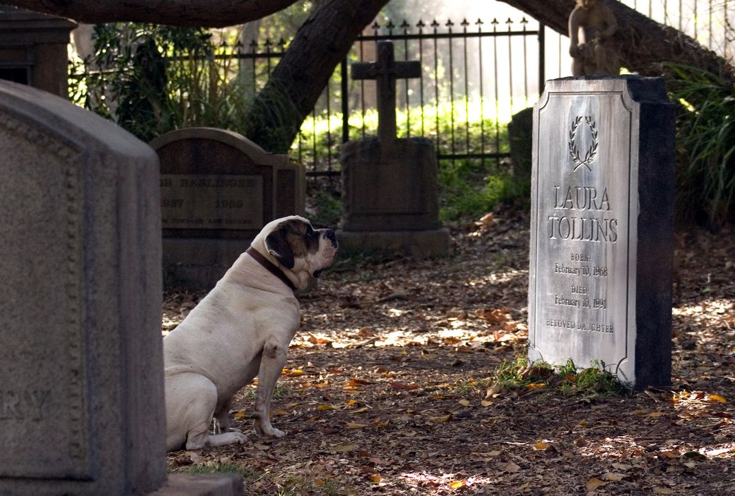 Als Walter den widerspenstigen Hund auf der Strasse entdeckt, verfolgt er ihn bis zu einem Friedhof, wo dieser sich neben einem Grab niederlässt. V... - Bildquelle: 2007 Warner Brothers