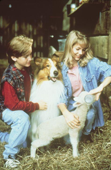 Die intelligente Lassie erweist sich als große Hilfe für Matt (Tom Guiry, l.) und April (Michelle Williams, r.) bei der Schafaufzucht ... - Bildquelle: Paramount Pictures