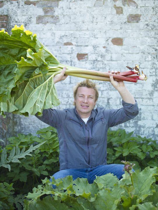 (2. Staffel) - Ohne Chemikalien züchtet Jamie Oliver Gemüse in seinem eigenen Garten ... - Bildquelle: Fremantle