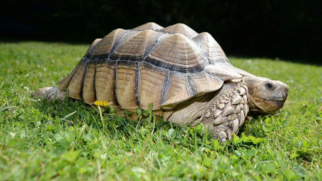 Reptil4 - Bildquelle: dpa