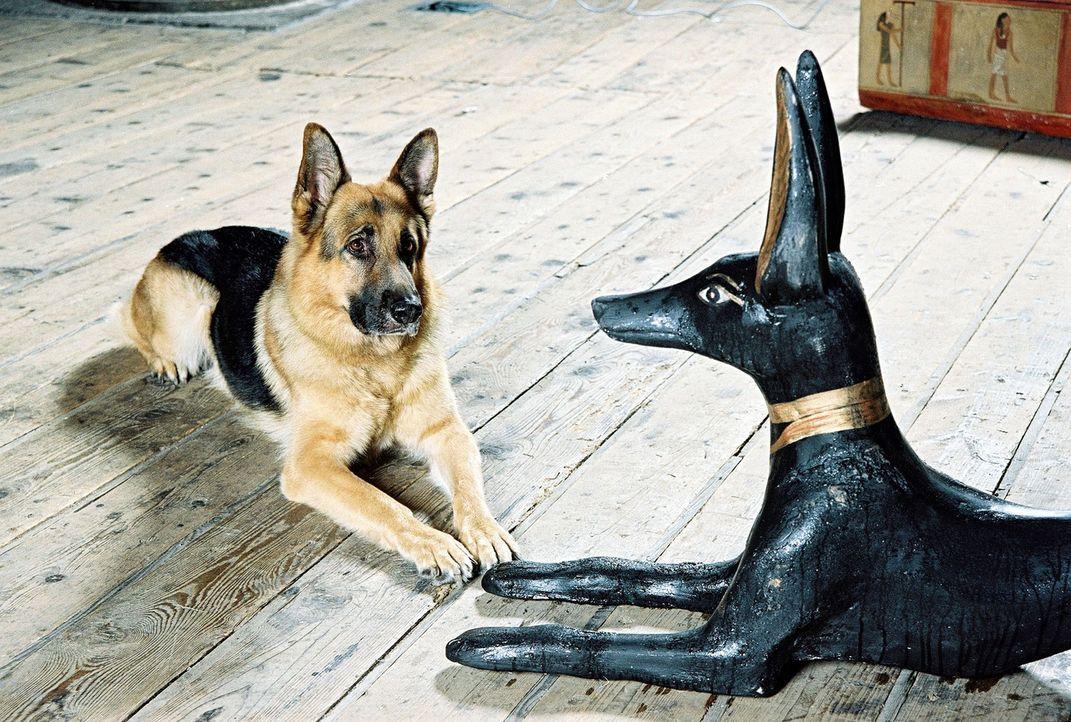 Rex bewundert den rätselhaften Anubis. - Bildquelle: Ali Schafler Sat.1