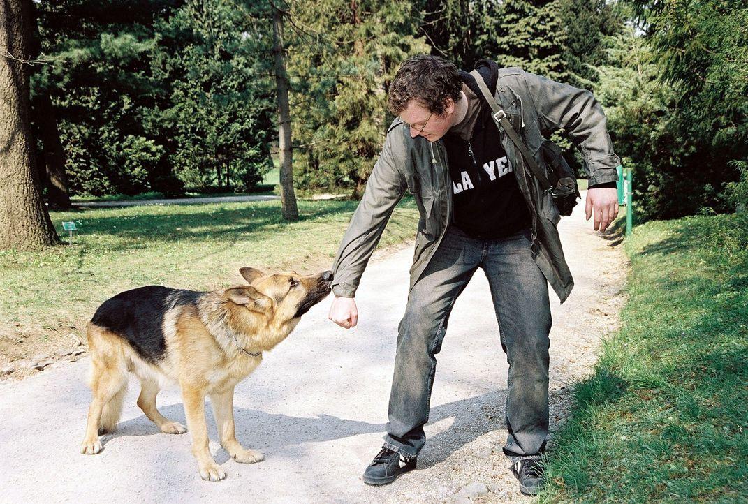 Rex legt sich im Park auf die Lauer. Schließlich findet er Jimi (Holger Schober), der einen kleinen Hund vergiftet hat. - Bildquelle: Ali Schafler Sat.1