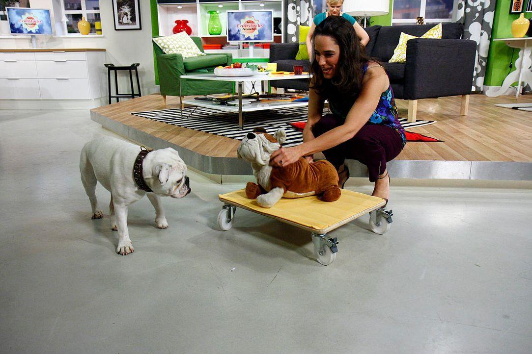fruehstuecksfernsehen-studiohund-lotte-in-action-im-studio-124 - Bildquelle: Ingo Gauss
