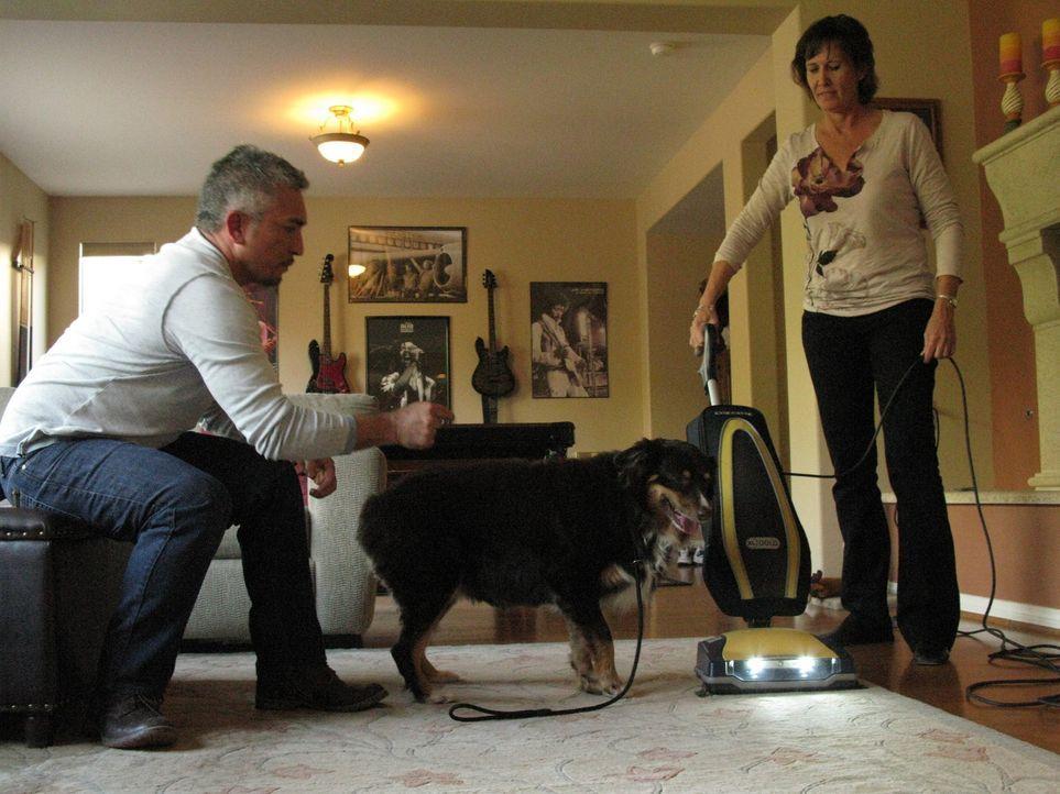 Heute trifft Cesar (l.) drei Hunde, die allesamt Angst vor bestimmten Gegenständen oder Geräuschen haben ... - Bildquelle: Neal Tyler MPH - Emery/Sumner Joint Venture