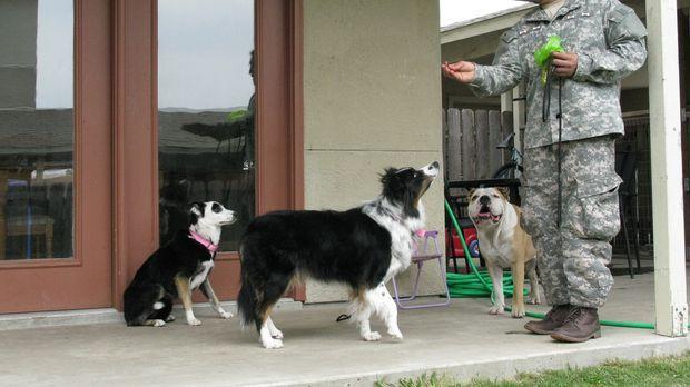 Cesar meldet sich heute von einer der größten Militärbasen der US-Army: Fort...