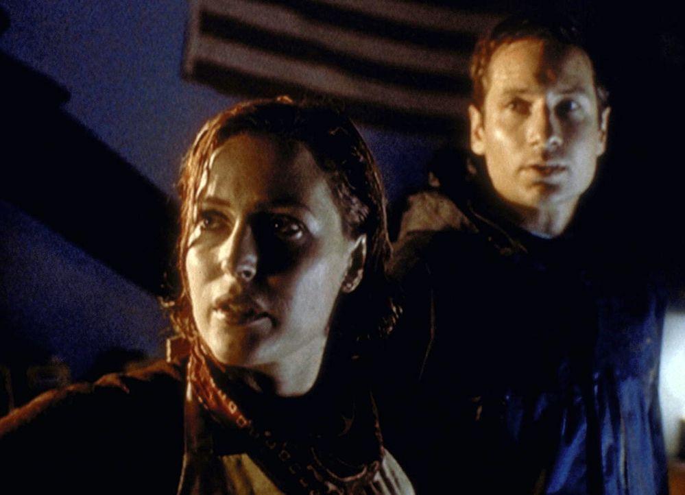 Scully (Gillian Anderson, l.) und Mulder (David Duchovny, r.) werden während eines Wirbelsturms in Florida mit einem Ungeheuer konfrontiert, das aus... - Bildquelle: TM +   2000 Twentieth Century Fox Film Corporation. All Rights Reserved.