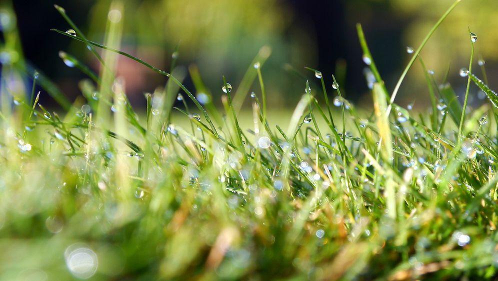 Rasen Bewässern Wie Oft Ihr Grün Verträgt Sat1 Ratgeber