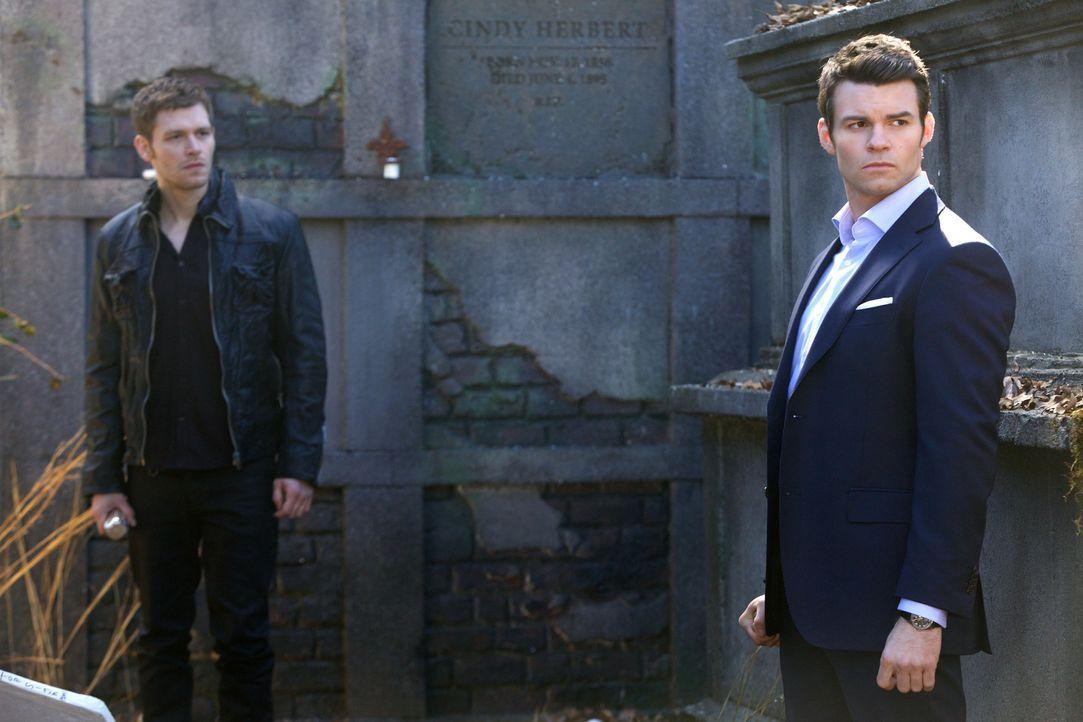 Klaus und Elijah - Bildquelle: Warner Bros Entertainment Inc.