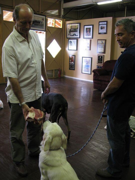 Familie Murray hat große Probleme mit ihrem Golden Retriever Cricket. Lyndon (l.) wurde sogar vor kurzem von dem Hund angegriffen. Kann der Hundeflü... - Bildquelle: Rive Gauche Intern. Television