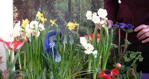 Anemonen, Narzissen, Hyazinthen und Tulpen – in puncto Frühlingsblumen ist er...