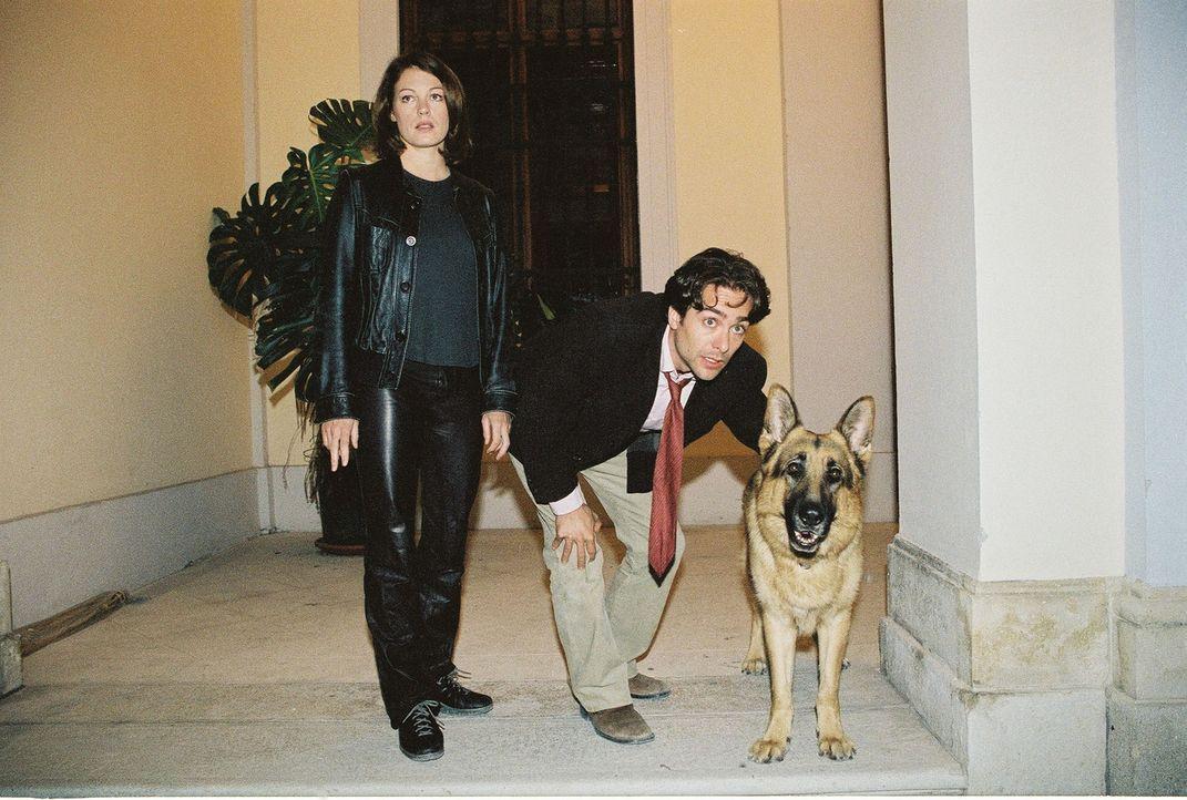 Niki (Elke Winkens, l.), Marc (Alexander Pschill, r.) und Rex verfolgen einen Tatverdächtigen ... - Bildquelle: Ali Schafler Sat.1