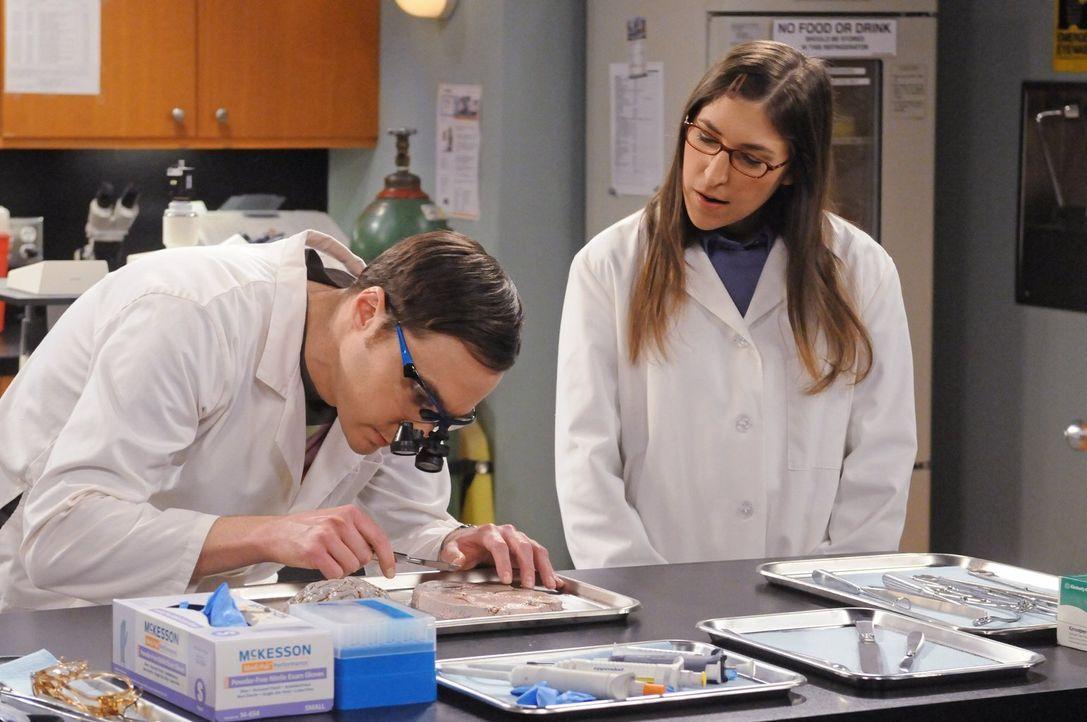 Dr. Siebert, der Universitätspräsident, unterbreitet Sheldon (Jim Parsons, l.) eine unangenehme Tatsache. Sheldon soll nämlich seinen Urlaub nehmen.... - Bildquelle: Warner Bros. Television