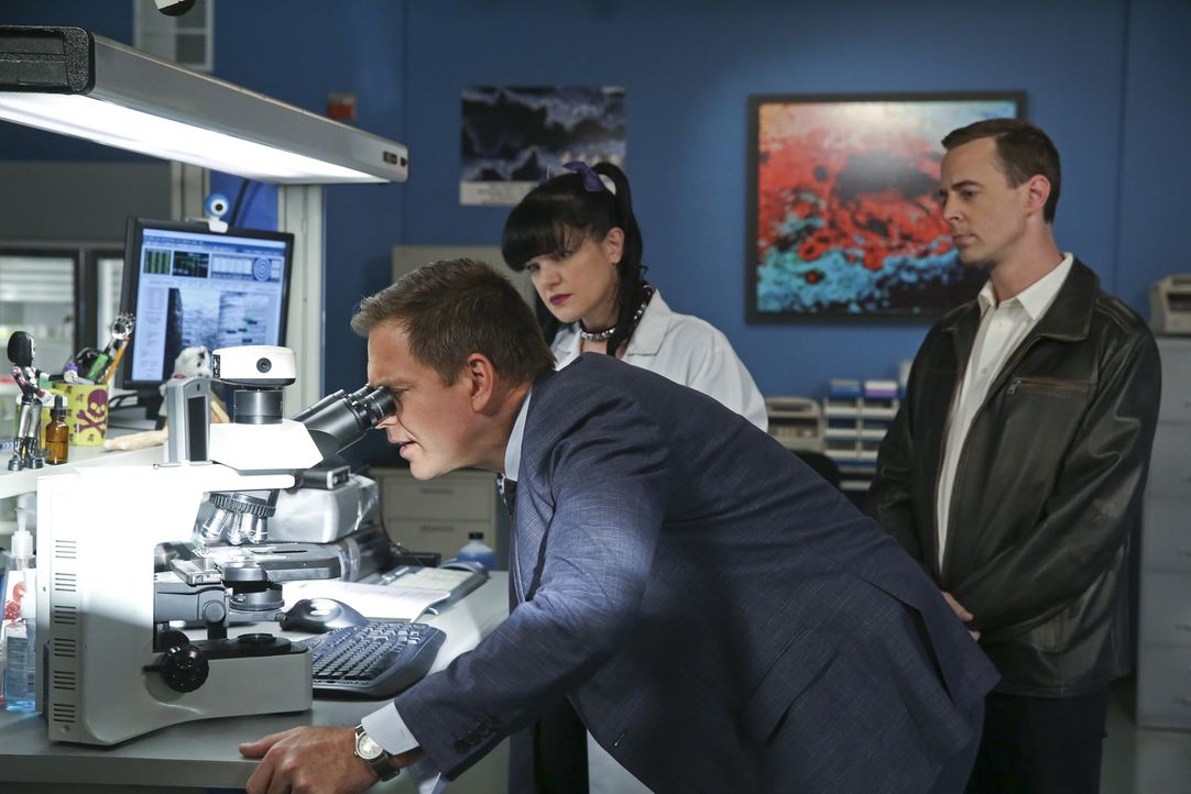 Ein neuer Fall wartet auf Abby (Pauley Perrette, M.), DiNozzo (Michael Weatherly, l.) und McGee (Sean Murray, r.) ... - Bildquelle: Cliff Lipson CBS Television