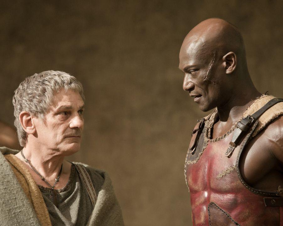 Um die Rangfolge unter seinen Gladiatoren festlegen zu können, ordnet Titus Batiatus (Jeffrey Thomas, l.) bei Drago (Peter Mensah, r.) Trainingskä... - Bildquelle: 2010 Starz Entertainment, LLC