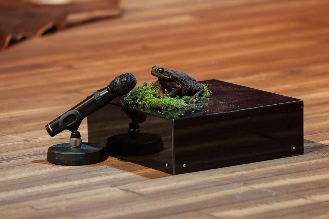"""Stiehlt der Frosch von """"The Voice Pets"""" bei """"LUKE! Die Woche und ich"""" dem Komiker Mockridge etwa die eigene Show? - Bildquelle: SAT.1"""