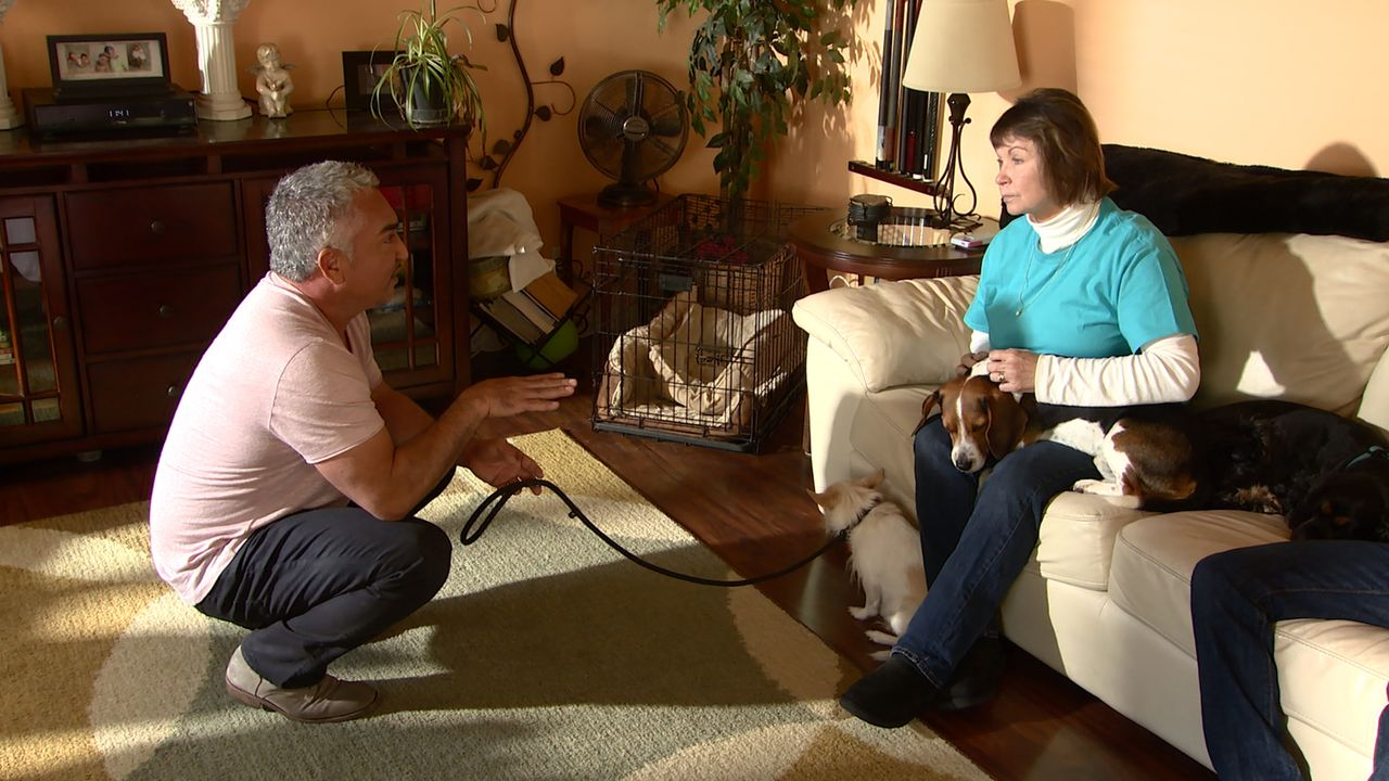Katy (r.) setzt einen Notruf an Cesar (l.) ab, denn der Hund ihres Enkels Nick macht ihr das Leben zur Hölle. Der Terrier-Chihuahua-Mischling Target... - Bildquelle: NGC/ ITV Studios Ltd