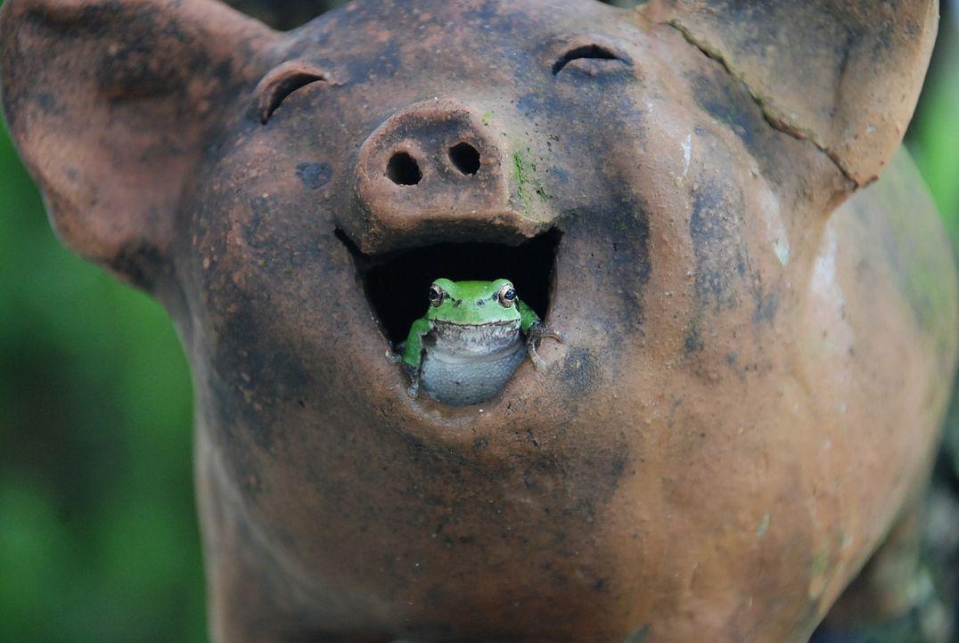 tree-frogs-517346_1280 - Bildquelle: Pixabay