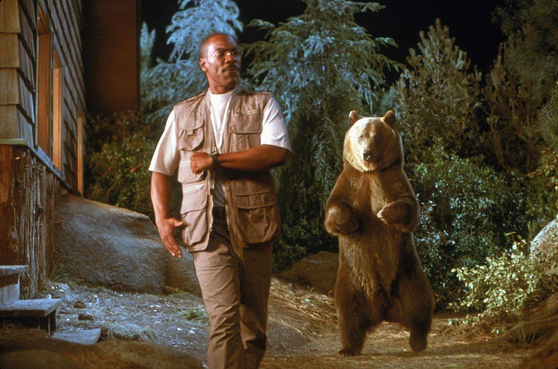 Ein Freund, ein guter Freund: Dr. Dolittle (Eddie Murphy) und sein Kumpel, der Zirkusbär Archie ... - Bildquelle: 1998 Twentieth Century Fox Film Corporation. All rights reserved.