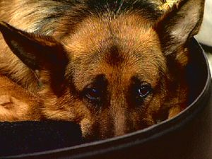 Hund und Mode - Frühstücksfernsehen - Bildquelle: Sat 1