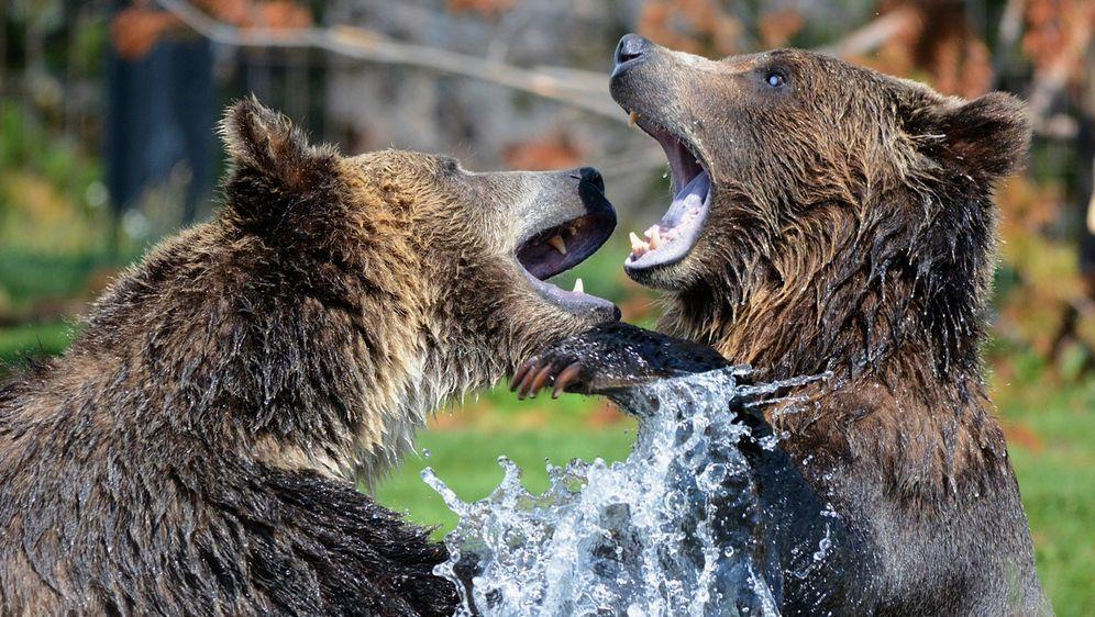 Bären: Die bekanntesten Arten