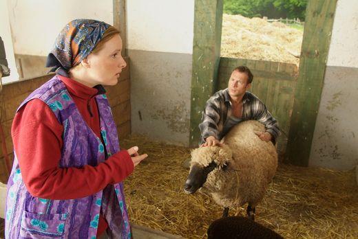 Sechserpack - Ein Bauer und sein Lieblings-Schaf - ein wirklich schönes Paar,...