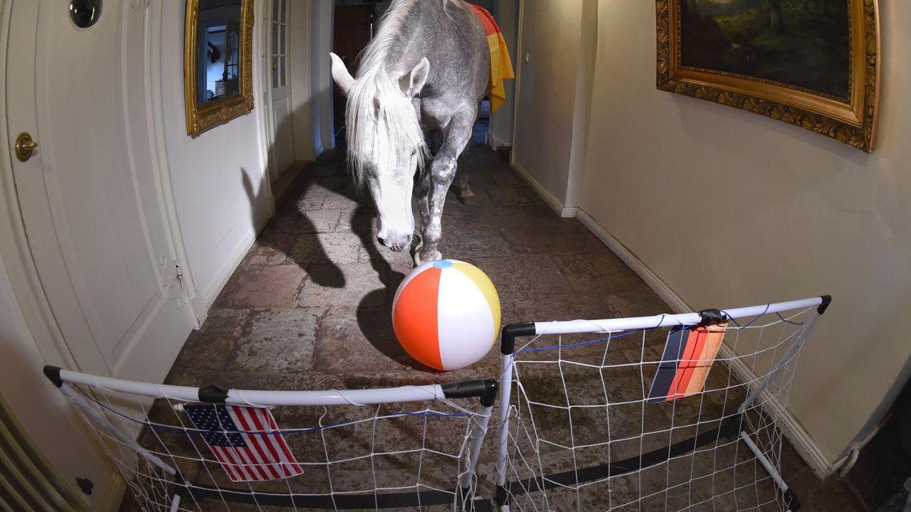 Pferd-Nasar