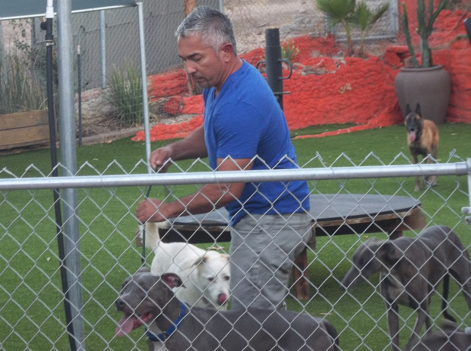 Der aggressive Hund Titan macht es seinen Besitzern nicht einfach, aber Cesar möchte zeigen, dass auch in diesem Hund ein liebenswerter Vierbeiner s... - Bildquelle: NGC/ ITV Studios Ltd