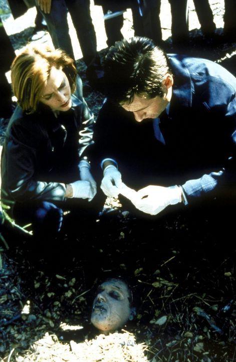 Scully (Gillian Anderson, l.) und Mulder (David Duchovny, r.) erkennen, dass das Grab aus einem rituellen Grund geschändet wurde. - Bildquelle: TM +   2000 Twentieth Century Fox Film Corporation. All Rights Reserved.