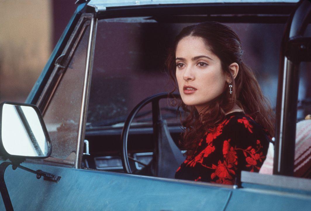 Als sich die aufregende Isabel (Salma Hayek) mit einem Gringo einlässt, gibt es schon bald gewaltigen Ärger mit ihrer Verwandtschaft ... - Bildquelle: Columbia Tri-Star