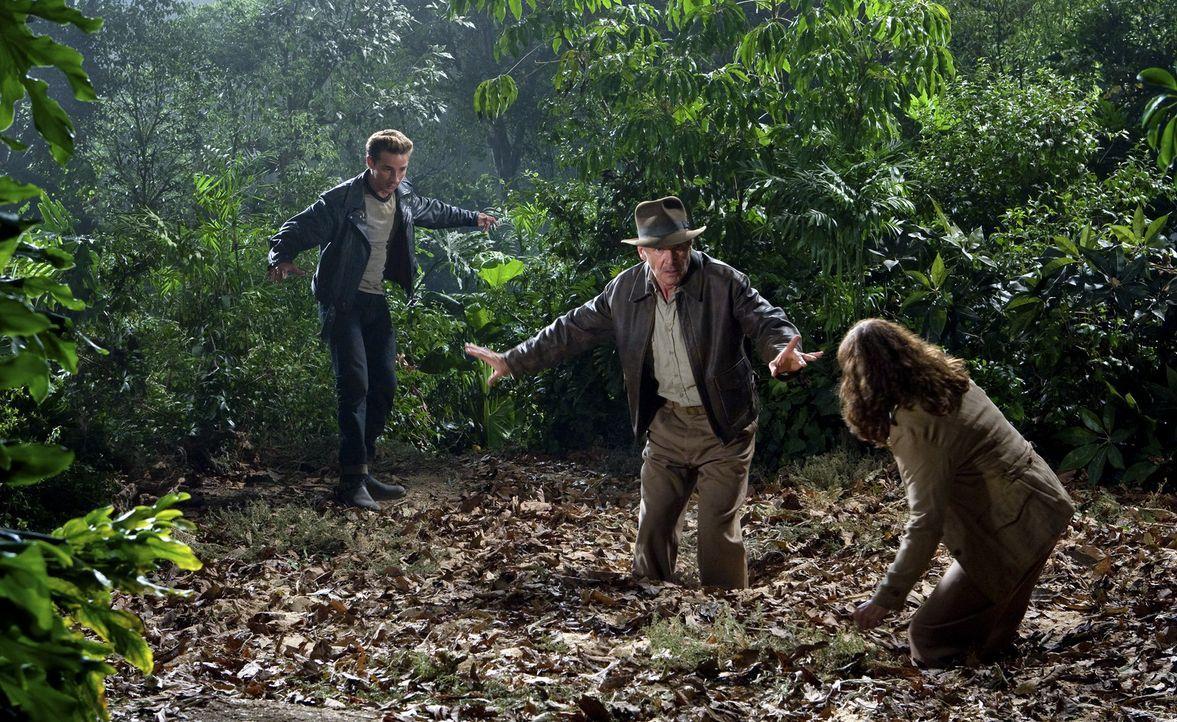 Auf der Suche nach dem Kristallschädel warten einige Überraschungen auf Indiana Jones (Harrison Ford, M.), Mutt (Shia LeBeouf, l.) und seine Mutte... - Bildquelle: David James Lucasfilm Ltd. & TM. All Rights Reserved