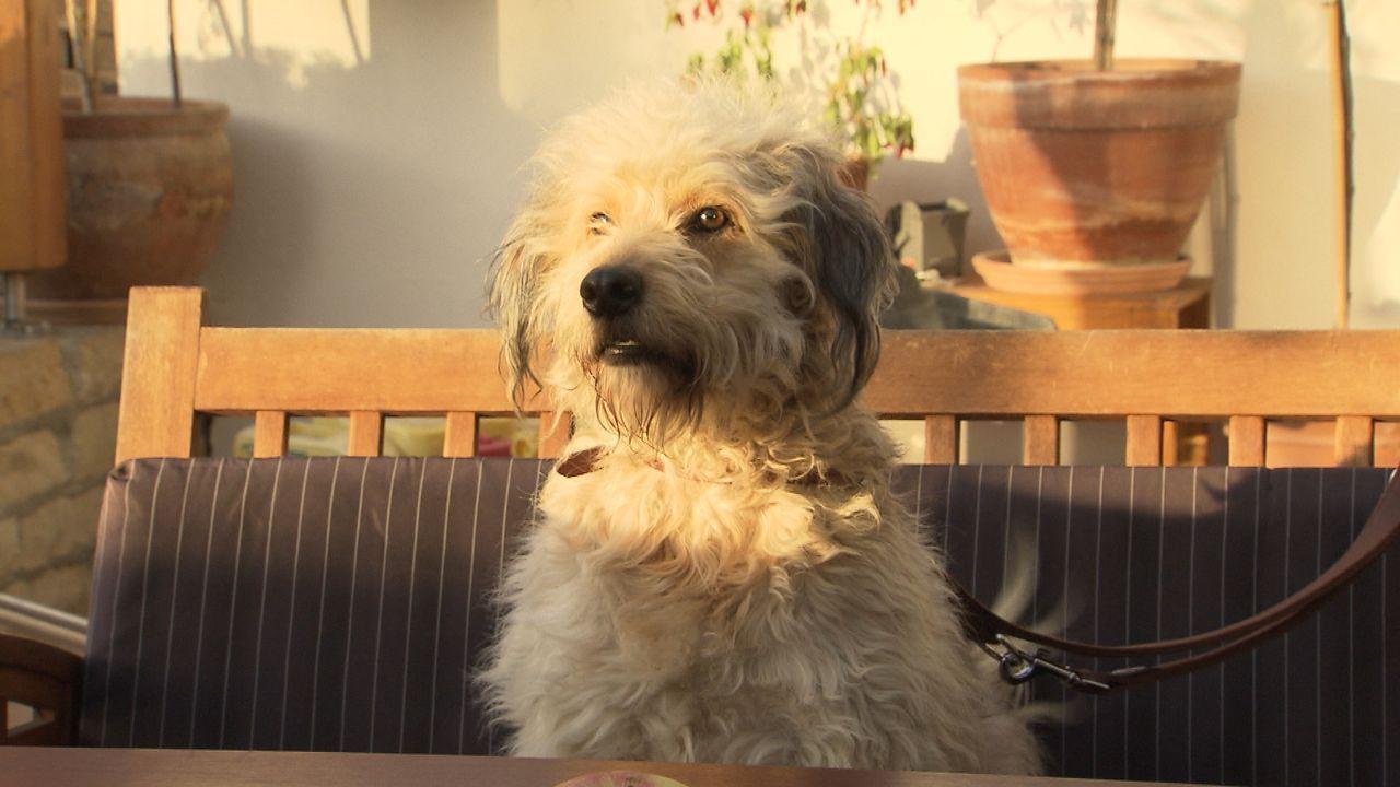 Mein-Bruder-mein-Hund-und-Eric2 - Bildquelle: SAT.1