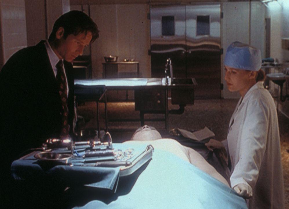Scully (Gillian Anderson, r.) und Mulder (David Duchovny, l.) erkennen bald, dass keine Seuche, sondern eine äußerst merkwürdige Mordmethode schuld... - Bildquelle: TM +   Twentieth Century Fox Film Corporation. All Rights Reserved.