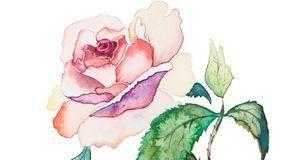 Deko & Basteln_2015_09_28_Rosen zeichnen_Bild 2_fotolia_la_balaur