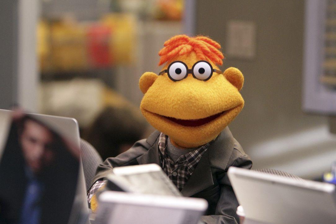 Da Miss Piggy schlechte Laune hat, muss sich Kermit was einfallen lassen, um sie wieder aufzuheitern. Gemeinsam mit Scooter (Bild) sucht er verzweif... - Bildquelle: Andrea McCallin ABC Studios