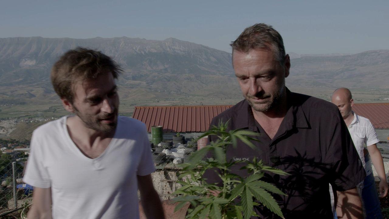 Albaniens dunklere Seite: Marihuana soweit das Auge reicht: Tom Waes (r.) entdeckt eine der größten illegalen Marihuana-Plantagen Europas und lernt... - Bildquelle: 2013 deMENSEN