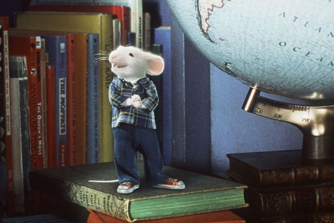 Eigentlich fühlt sich Stuart in seinem neuen Heim sehr wohl - wäre da nicht die hinterhältige Hauskatze ... - Bildquelle: Columbia TriStar Film