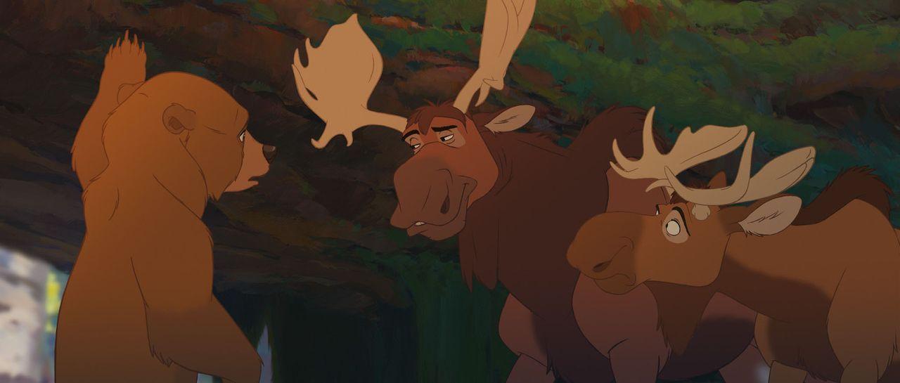Kenai (l.) bittet die beiden Elche Benny (r.) und Björn (M.) um Hilfe. - Bildquelle: Buena Vista Pictures Distribution. All Rights Reserved.