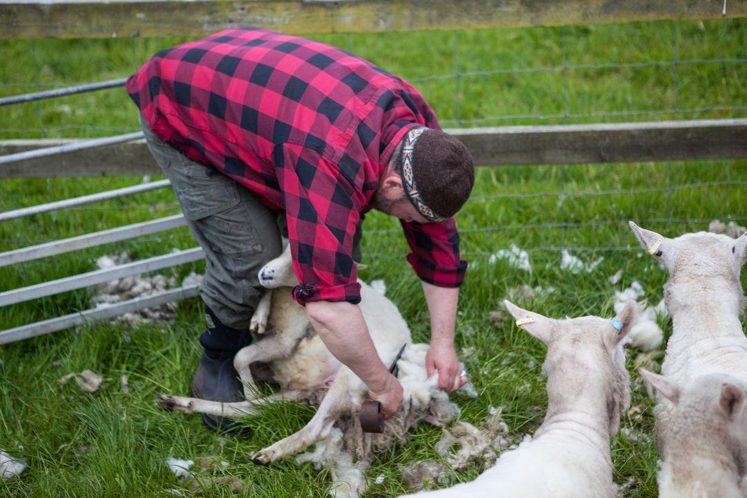 Fair Isle hat für seine gerade mal 60 Einwohner nicht viel zu bieten. Für andere vielleicht ein Albtraum, aber Tommy lebt hier seinen Traum ... - Bildquelle: Jo Young 2015 BBC / Renegade Pictures
