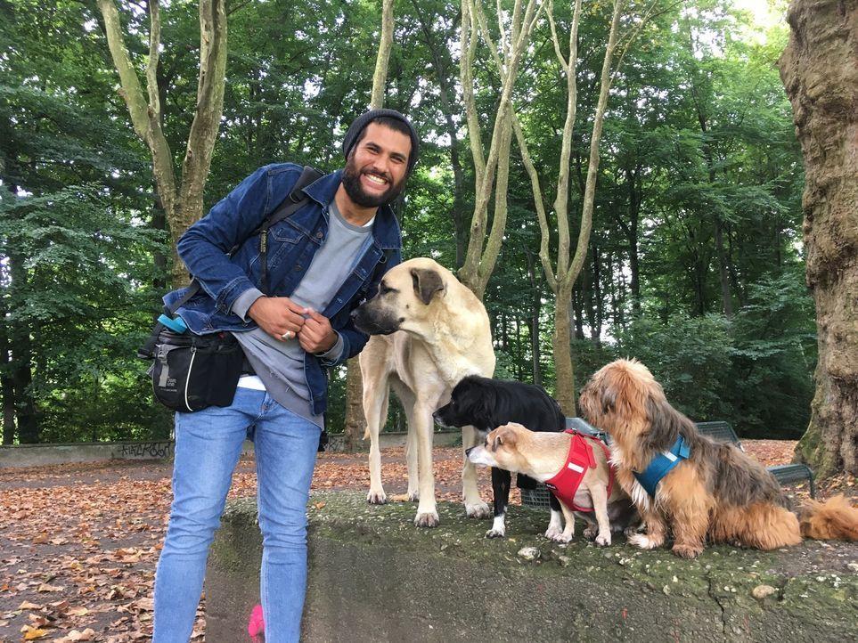 Tierisch hilfreich: Masih Samin (Foto) möchte Hund und Mensch helfen, indem er zusammen mit Sabine Hulsebosch Hunde aus Tierheimen holt und ihnen ei... - Bildquelle: SAT.1