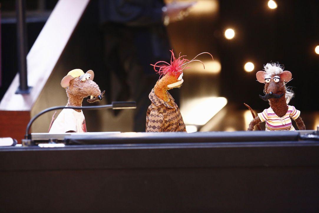 Rizzo (l.), Pepe (M.) und Yolanda (r.) versuchen, Pizza zu beschäftigen, damit dieser die Show in Kermits und Miss Piggys Abwesenheit nicht ruiniert... - Bildquelle: ABC Studios