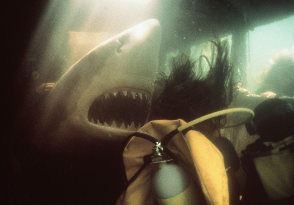 Immer und überall wartet ein blutrünstiger Hai ... - Bildquelle: Nu Image