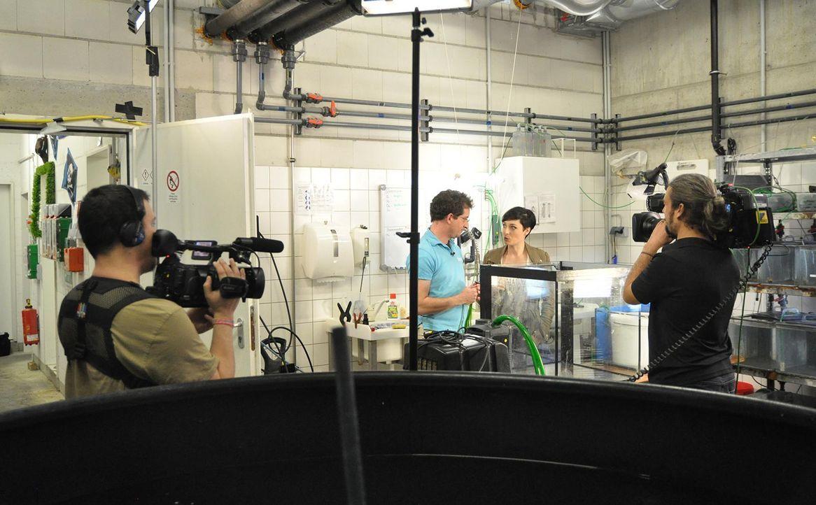 Sea life Dreh - Bildquelle: Janus TV