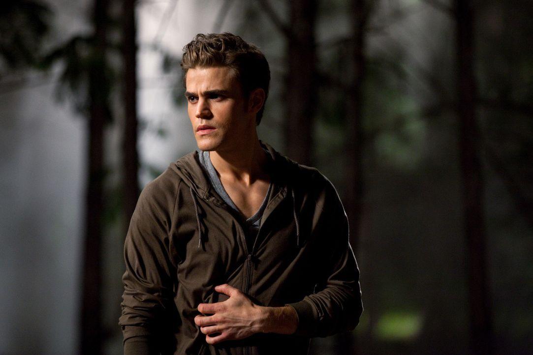 Im letzten Moment schafft es Stefan (Paul Wesley) einen Werwolf von Caroline abzuwehren, doch erst einem Dritten gelingt es die angriffslustige Best... - Bildquelle: Warner Brothers