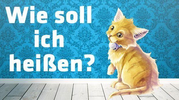 sat1-gold-kater-wie-soll-ich-heißen-620-349