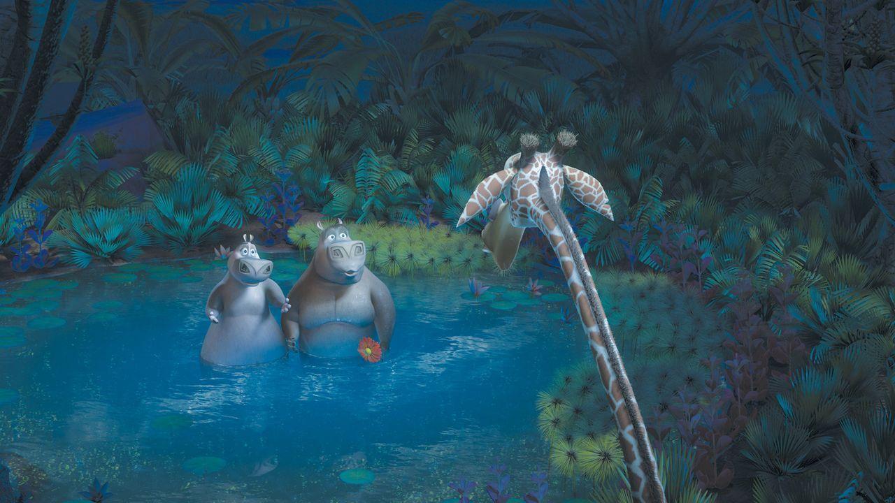 Eigentlich wollten die New Yorker Zootiere Melman (r.), Gloria (l.), Alex und Marty nur wieder nach Hause zurückkehren. Doch sie landen in Afrika u... - Bildquelle: (2008) DREAMWORKS ANIMATION LLC. ALL RIGHTS RESERVED.