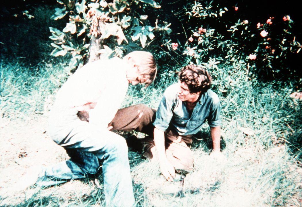 John-Boy Walton (Richard Thomas, l.) kämpft mit einem fremden Jungen (Michael Rupert, r.), der aus einem Lager ausgerissen ist, um einen Waschbären... - Bildquelle: WARNER BROS. INTERNATIONAL TELEVISION