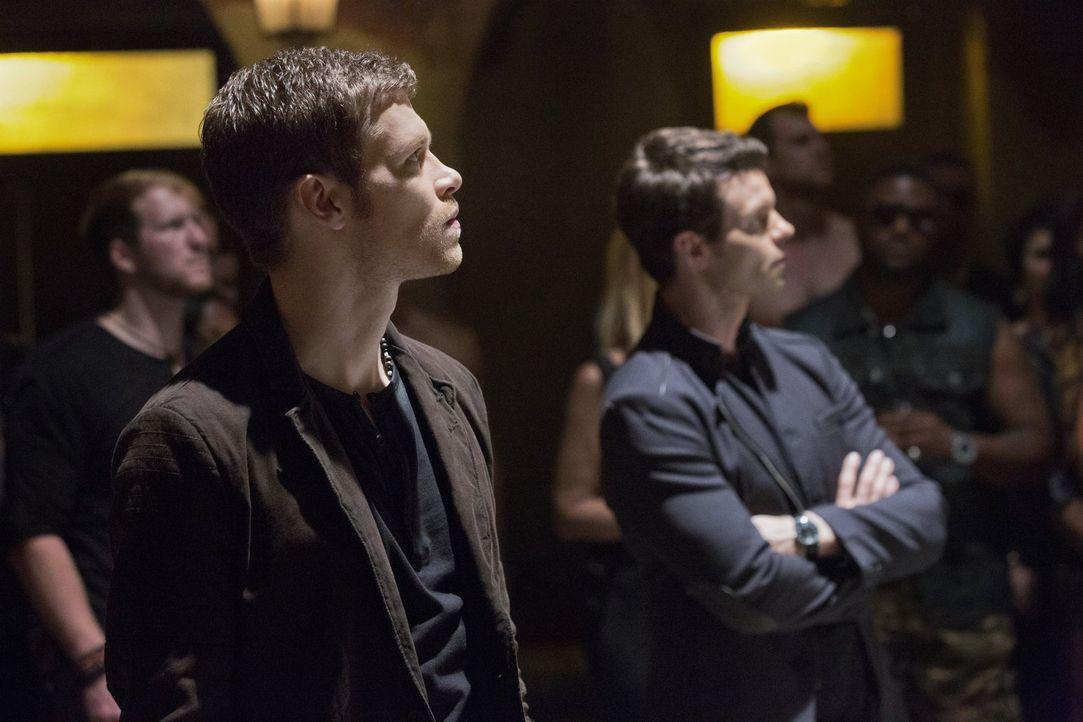 Auf der Suche nach Hayley gehen Klaus (Jospeh Morgan, l.) und Elijah (Daniel Gillies, r.) ganz unterschiedliche Wege ... - Bildquelle: Warner Bros. Television